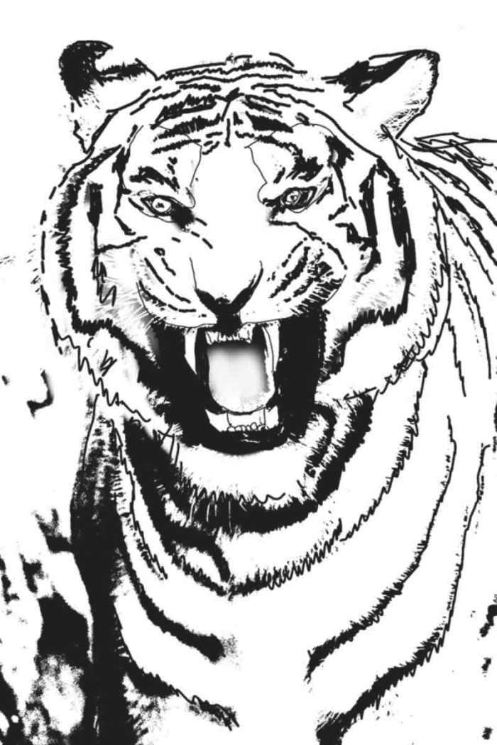 04. Tiger. 36×24 cm. Tegning. 2013. www.uffechristoffersen.net