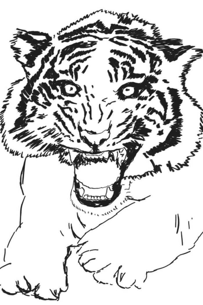 08. Fremadstormende tiger. 24×36 cm. Tegning. 2013. www.uffechristoffersen.net